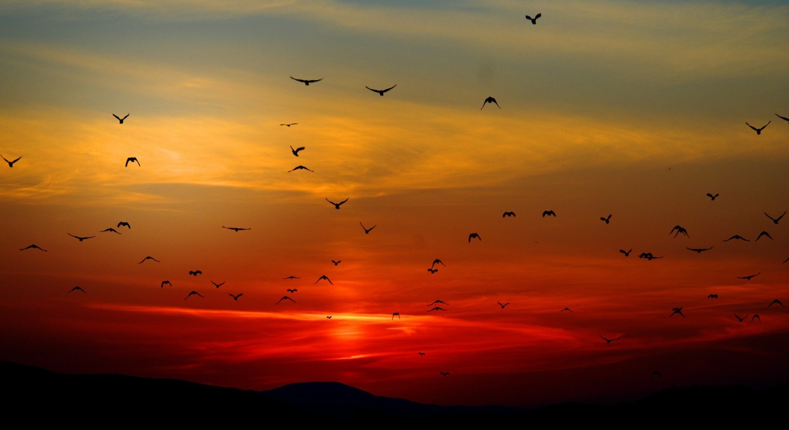 Poem : Shadowed dark rising mountains in the horizon, the sky bleeding rawness in red, thin white clouds and flutters of a hundred birds flying from afar towards you