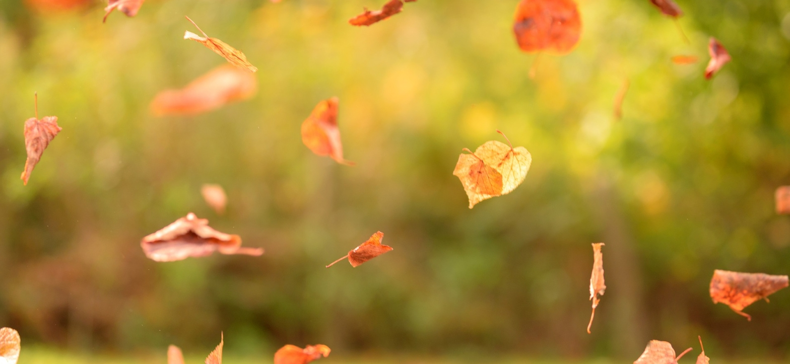 Poetry A shower of orange crisp autumn leaves falling in a blurred backdrop of trees