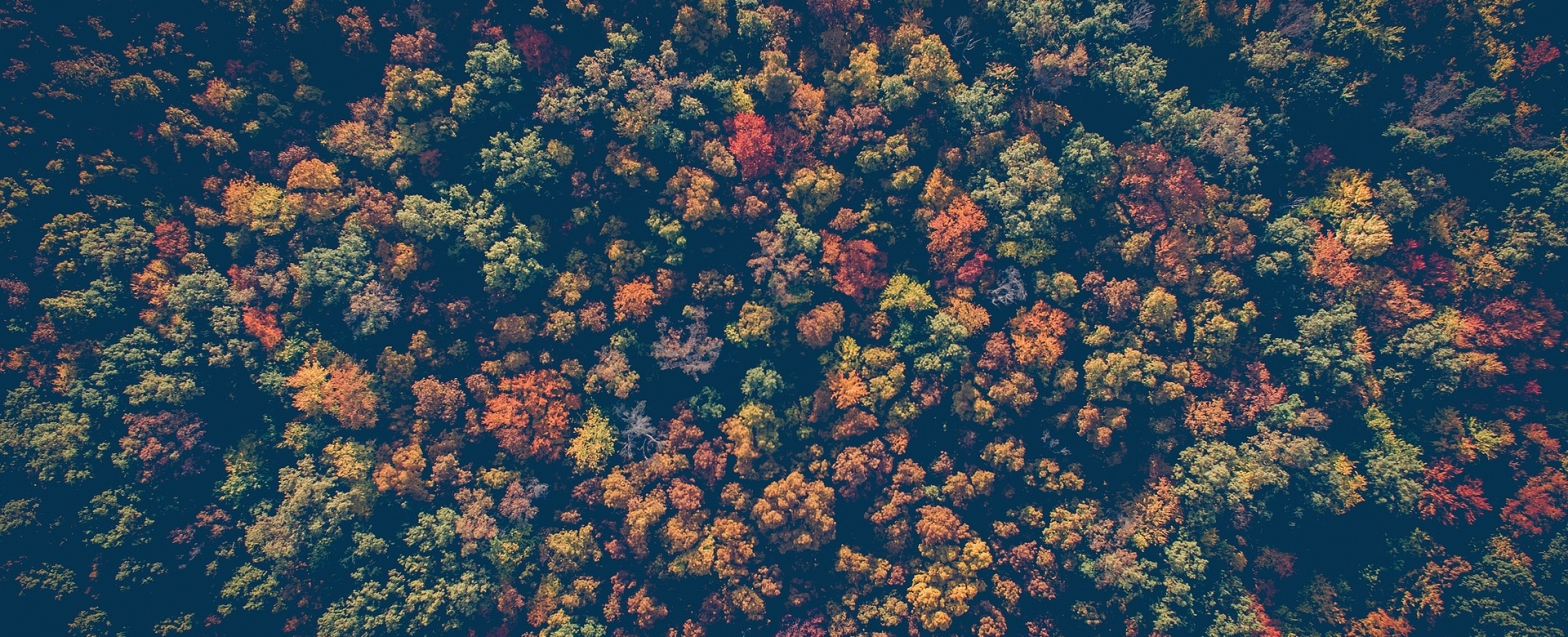 Poetry view from above of a forest in autumn foliage